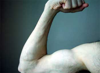 arm_muscles.jpg