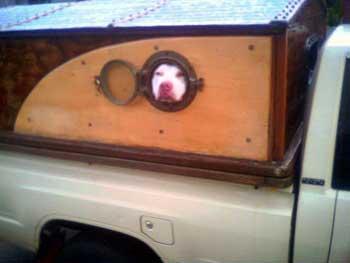 dog_porthole_2.jpg