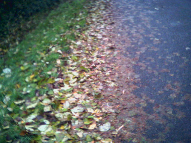 road_leaves.jpeg