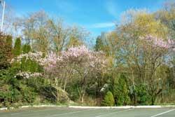 spring_blossoms_1.jpg